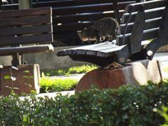Taskopru 2013 - Kedi Nereye Bak?yor? by <b>my17ida</b> ( a Panoramio image )