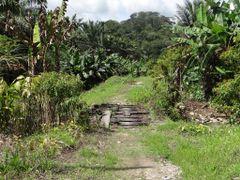Puente abandonado del antiguo Ferrocarril en La Guaria by <b>Gino Vivi</b> ( a Panoramio image )