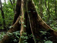 Gunung Mulu & Mt Api Sarawak Nov 2013-9 by <b>erikvz</b> ( a Panoramio image )