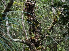 Gunung Mulu & Mt Api Sarawak Nov 2013-12 by <b>erikvz</b> ( a Panoramio image )