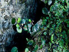 Gunung Mulu & Mt Api Sarawak Nov 2013-16 by <b>erikvz</b> ( a Panoramio image )