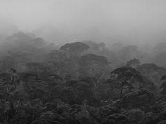 Gunung Mulu Camp 5 Sarawak Nov 2013-3 by <b>erikvz</b> ( a Panoramio image )