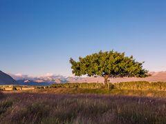 Godley Peaks Rd - Trees by <b>Kelvin Reid</b> ( a Panoramio image )