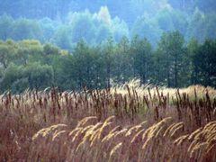 Костюковичи . Поле и лес. Kostukovichi. Field and forest. by <b>alex26856</b> ( a Panoramio image )