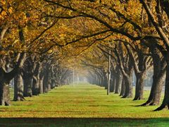 Linwood Avenue by <b>clickNZ</b> ( a Panoramio image )