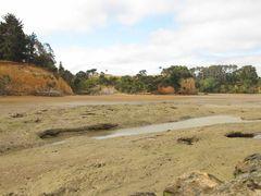 Low tide island by <b>NZ Frenzy Guidebook (North) www.NzFrenzy.com</b> ( a Panoramio image )