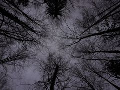 Blick in die Baumkronen by <b>Ruedi ?(?o?)</b> ( a Panoramio image )