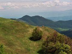 Radan - na Sokolovom visu by <b>ZNikolic</b> ( a Panoramio image )