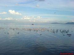 Pelicanos Borregones, Petatan, Michoacan, Mexico by <b>Savageo</b> ( a Panoramio image )