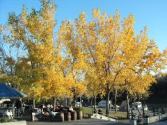Autumn at the Forks by <b>Kirk Cumming</b> ( a Panoramio image )