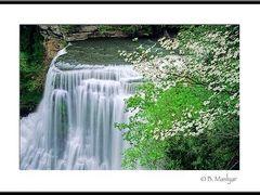 Springtime at Burgess Falls - lightontheland.com by <b>B. Maslyar</b> ( a Panoramio image )
