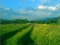 Ne Fush te Pallatices by <b>Neim Sejfuli ?</b> ( a Panoramio image )