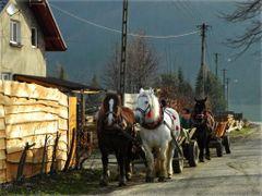 rzadki widok by <b>grojec</b> ( a Panoramio image )