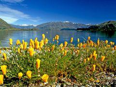 Lake Wanaka Summer by <b>john adamson</b> ( a Panoramio image )