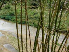 Bambu  by <b>h2chu</b> ( a Panoramio image )