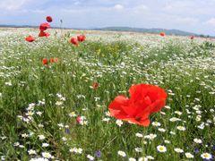 Pe campul cu florile...2 by <b>sarpe195</b> ( a Panoramio image )