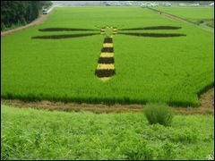 Giant dragonfly in rice field by <b>ANDRE GARDELLA</b> ( a Panoramio image )