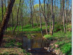 Gracine stream, LTU by <b>Jurgis Karnavicius</b> ( a Panoramio image )