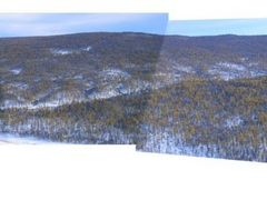 Taiga forest nearby Mongonmorit by <b>Bendenschneider</b> ( a Panoramio image )