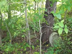Harrison Family Graveyard (private) by <b>info@grantlib.org</b> ( a Panoramio image )