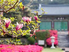 Gimje Spring Morning @ ??? by <b>Faintlightofdawn</b> ( a Panoramio image )