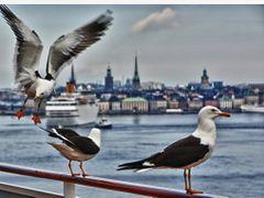 Stockholm Hafen by <b>Goldfoto</b> ( a Panoramio image )