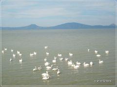 Vista del Lago de Chapala by <b>Arturo Cardenas L</b> ( a Panoramio image )