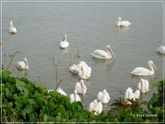 a orilla del lago by <b>Arturo Cardenas L</b> ( a Panoramio image )