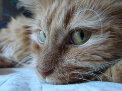 Cat named Xena, little warrior princess  © All Rights Reserved  by <b>jgevans</b> ( a Panoramio image )