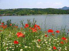 Dunarea in iunie (Eselnita) by <b>Adriana Popa</b> ( a Panoramio image )