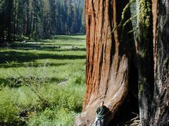 Log Meadow, Sequoia NP by <b>cbaisan</b> ( a Panoramio image )