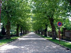 Tree-Lined Street in Morhange, France by <b>John Alphonse</b> ( a Panoramio image )