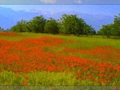 Field-Fushe by <b>Neim Sejfuli ?</b> ( a Panoramio image )
