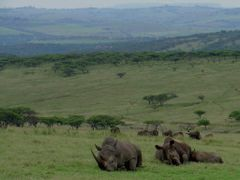Rhino at Tala by <b>Steve Bennett</b> ( a Panoramio image )