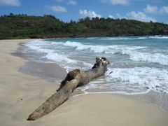 Dead tree at Rock Quarry Beach by <b>Joaquin Cuenca Abela</b> ( a Panoramio image )
