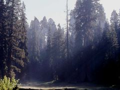 smoke in the forest, Sequoia NP by <b>cbaisan</b> ( a Panoramio image )