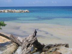 Bahamas by <b>zgazda</b> ( a Panoramio image )
