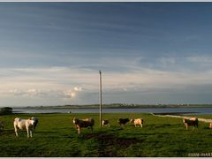 Range land close to Ballyvaughan, Ireland Co. Clare by <b>Marina Frintrop</b> ( a Panoramio image )