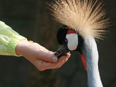 Bird-Singing Woods - 1 by <b>EugeneTrambo</b> ( a Panoramio image )