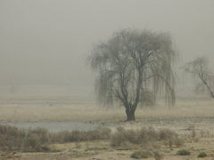Trees in the mist by <b>j. adamson</b> ( a Panoramio image )