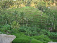 ?Rice Terrace? by <b>?AXL?BACH?</b> ( a Panoramio image )