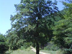 rruga per Kremenate by <b>Blerimi Gjilan</b> ( a Panoramio image )