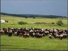 Walk in the Mongolian Plateau 004 by <b>zouzaimenggugaoyuan</b> ( a Panoramio image )