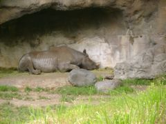 Portland Zoo Rhino by <b>bluebuffsteve</b> ( a Panoramio image )