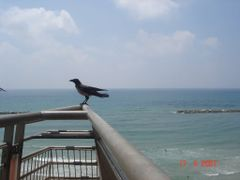 Israel.Bird and Mediterrnean Sea in Natanya by <b>lubaphoto</b> ( a Panoramio image )