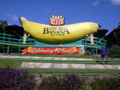 The Big Banana by <b>Alan Farlow</b> ( a Panoramio image )