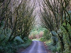 Forest Avenue by Tony Reid by <b>Tony Reid</b> ( a Panoramio image )