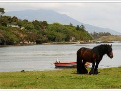 Unterwegs am Ring of Beara, Irland County Cork by <b>Marina Frintrop</b> ( a Panoramio image )