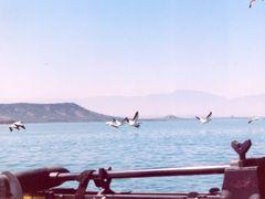 Pelicanos En Vuelo by <b>omargp</b> ( a Panoramio image )