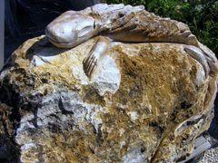 kogyik - stone lizard by <b>Gyula Kobol</b> ( a Panoramio image )